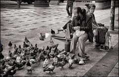 2009-09_IMG_2300_20160531NB (Réal Filion) Tags: paris france pigeon sidewalk avenue sdf trottoir itinérant champsélysées