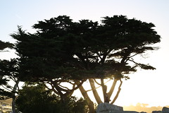 (bwgtheatre) Tags: california sunset pacificgrove loverspointbeach