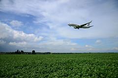 CN-ROA (DST_2617) (larry_antwerp) Tags: steenokkerzeel belgium belgi          aircraft vliegtuig veld field boeing 7378b6 737800 royalairmaroc
