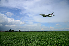 CN-ROA (DST_2617) (larry_antwerp) Tags: steenokkerzeel belgium belgië 比利时 比利時 бельгия ベルギー בלגיה बेल्जियम 벨기에 بلژیک بلجيكا aircraft vliegtuig veld field boeing 7378b6 737800 royalairmaroc