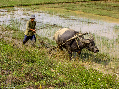 On the job # Vietnam # PICT0965 # KonicaMinolta Dimage G600 - 2005 (irisisopen f/8light) Tags: color digital minolta konica farbe dimage g600 irisisopen