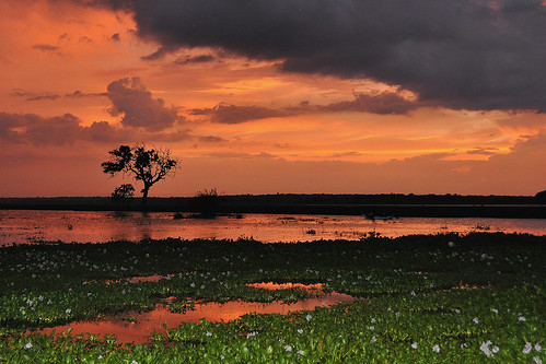 Weerawila Lake - Orange Nightfall