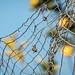 Lemon+Fence