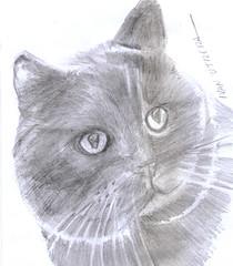 gato a lpiz (ivanutrera) Tags: gato draw dibujo drawing dibujoalpiz lpiz ilustracion animal gatito minino pencil sketch sketching