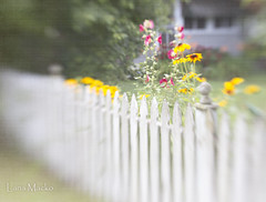 Told ya! (LanaScape Photos) Tags: texture lensbaby fence alt michigan overlay muse typical friday southhaven hff lilowl