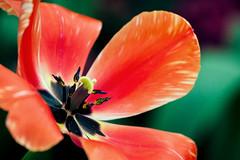 Flowers (Garret Voight) Tags: plants como flower nature minnesota garden zoo organic saintpaul marjoriemcneelyconservatory