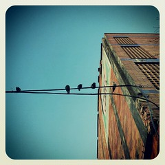En Reposo (Yeinnito) Tags: birds square cable squareformat palomas reposo cielosky lomob instagram instagramapp flickrandroidapp:filter=none uploaded:by=flickrmobile