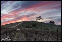 Closing Time (Aaron M Photo) Tags: california friends fun vines nikon wine winery vineyards winetasting grapes grape steinbeck pasorobles 2012 d800 lakenacimiento nikond800 steinbeckvineyards sashasbirthdayweekend aaronmeyersphotography steinbeckwine steinbeckwinery