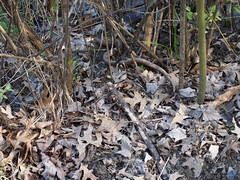 Snake Spotting (Raccoon Photo) Tags: park wood flowers ohio wild lake green bird love nature beautiful beauty leaves birds animal animals loving reflections walking fun spring nice pond woods warm day natural metro walk wildlife birding may parks trails growth trail reflect buds growing bud ponds magical budding walkinginnature issac wooded qualitytime niceday daysoff lakeissac