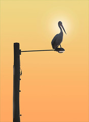 Pel on a Post (caralan393) Tags: sunset orange yellow post pelican
