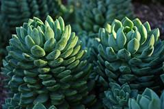 Green Plant 0002
