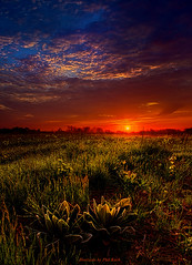 Dreamland (Phil~Koch) Tags: morning flowers blue autumn winter sunset red portrait orange sun snow green fall love ice nature floral field leaves yellow vertical wisconsin clouds sunrise season photography landscapes office spring twilight peace earth farm horizon scenic meadow inspired naturallight farmland photograph environment serene agriculture inspirational nationalgeographic horizons summerspring philkoch