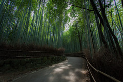 Bamboo Forest Path (megawheel360) Tags: japan canon geotagged eos asia  5d mark2
