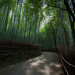 Bamboo Forest Path