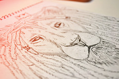 Rasta Lion (Marcos D. Torres) Tags: blue bw dog india white man black guy bird girl illustration pen pencil ink paper dead skull sketch cool wolf blu sketching lion sketchbook ill gal marker illustrator sharpie sketches marcos caveira ilustração rambo torres ilustrador shading caveirismo skullism