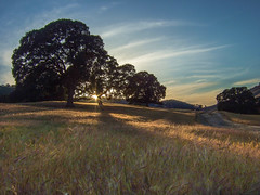 peekaboo (Marc Crumpler (Ilikethenight)) Tags: california trees sunset usa sun grass clouds landscape golden afternoon shadows hiking trails hills bayarea fujifilm eastbay sunrays ebrpd roundvalley contracostacounty eastbayregionalparkdistrict fujipix fujif30 ebparks ilikethenight marccrumpler ebparksok