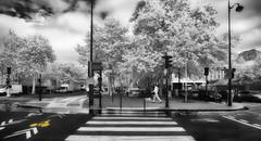bike (greg westfall.) Tags: street blackandwhite bw dog white man black paris france wet lamp rain bike bicycle canon french person europe streetscene lamppost infrared blueribbonwinner 52weeks lifepixel 830nm 1dmk3 gregwestfall gregwestfallphotography ldlnoir
