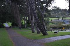 Cabinteely Park, Cabinteely, Dublin, Ireland - DSC_0148 (John Hickey - fotosbyjohnh) Tags: ireland dublin dog water google nikon flickr path tamron pathway googleimages publicpark publicplace cabinteely cabinteelypark johnhickey flickrimages publicamenity d5100 nikond5100 dunlaoghairerathdowncouncil parksdepartmentb