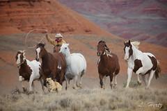 Dog _Horse2 (blackhawk32) Tags: horses west wranglers wyoming bighorn range hideout hideoutlodge