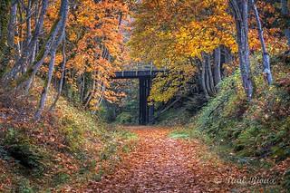 7602 Trail