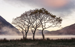 Crummock Trees LPOTY 2014 Classic View runner up (colinbell.photography) Tags: water crummock takeaview lpoty lpoty2014 landscapephotographeroftheyear2014 landscapephotographeroftheyear2014spotty2014