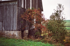 (^ autumn deluded) Tags: wood trees light sky mountains green fall film nature grass stone barn analog 35mm canon landscape outdoors photography haze farm country grain barns farmland 35mmfilm backcountry analogue filmcamera hazy filmgrain naturephotography filmphotography