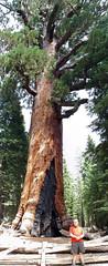 20100913_11p (mckenn39) Tags: california nature nationalpark yosemitenationalpark sierranevada
