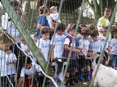 Alimentando animais na fazendinha (Colgio Razes) Tags: natureza infantil das animais colgio mogi fazendinha ipad cruzes educao razes unointernacional sistemabilngue