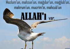 ﷲ (gLySuNfLoWeR) Tags: islam allah iman kuş martı mazlum mahzun müslüman ﷲ mahcub