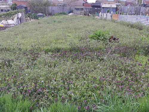 "Allotment 1 • <a style=""font-size:0.8em;"" href=""http://www.flickr.com/photos/95373130@N08/12800901384/"" target=""_blank"">View on Flickr</a>"