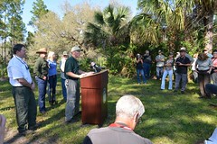 FP224 release 01 (MyFWCmedia) Tags: usa florida wildlife release panther commissioner 2014 fwc floridapanther floridafishandwildlife myfwc pambondi myfwccom ronbergeron darrellland injuredpanther fp224