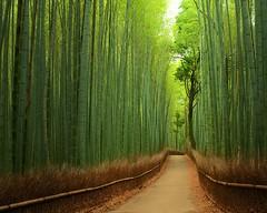 Бамбуковая тропа, Япония