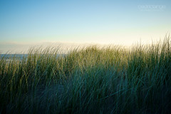 Dans les herbes hautes... (Cedpics) Tags: morning beach nature grass sand sable nz plage herbe eastcape