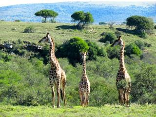 South Africa Hunting Safari - Eastern Cape 25