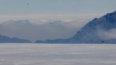 Djebel Musa (Jos Rambaud) Tags: africa mountain misty fog clouds mediterraneo morocco nubes montaa marruecos musa niebla cloudscape tarifa jebel seaofclouds djebel mardenubes   moiunt jebelmusa yebel yebelmusa djebelmusa