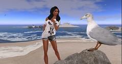 Otium...bird talkin' (stormyseas11) Tags: sea seagulls beach long avatar sl secondlife serena cay stormyseas secondlife:z=22 secondlife:x=95 secondlife:y=173 secondlife:region=serenalongcay secondlife:parcel=otiumleisurelaziness secondlife:globalx=305759 secondlife:globaly=290477 secondlife:globalz=222356
