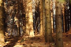 Riflessi al Monte Caio (Danifourtyone) Tags: trees winter light sun alberi woods parma monte caio provincia inverno tosco riflessi luce emiliano appennino bosco schia