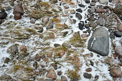 Merepiiril (anuwintschalek) Tags: schnee winter sea snow ice grass see rocks meer estonia december stones baltic steine gras peninsula lumi eis ostsee meri itmeri eesti lahemaa estland talv 2014 j halbinsel kaberneeme rohi kivid lnemeri d7k krred poolsaar nikond7000 18140vr