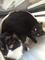 Two Peas in a Pod (Foxy and Muesli) Tags: foxy scratchingpost muesli