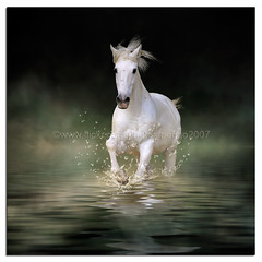 I like experimenting (pongo 2007) Tags: horse photoshop lusitano ol pongo2007