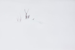 Snowblind (jasohill) Tags: city white snow signs nature japan landscape photography post zen simple matsuo hachimantai