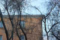 (Evgeny_Ukhov) Tags: building tree wire foto outdoor minimalism tangle