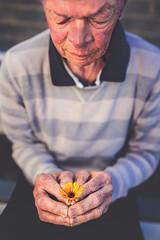 caring hands week22 of dogwood 52 week challange (Sigita JP) Tags: portrait flower hands oldman week22 naturallightphotography naturallightportrait dogwood52