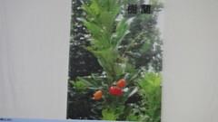 DSC07602 (yongheecs永和社大生態保育社) Tags: 林場