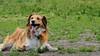 16-05-15_untitled_641 (Daniel.Lange) Tags: dog philadelphia dogs dogdayafternoon spado columbussquarepark
