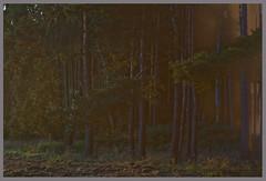 AH62_4205 (der_andyrandy) Tags: wald hood abendstimmung nebel amazingamazing ast canoneos7d