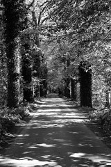 Way into the woods (Jannik K) Tags: trees bw nature forrest natur samsung sw leafs wald bltter bume allee fluchtpunkt nx1