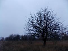 dead tree (Stillhet A.) Tags: awesometrees