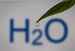 Water of Life (SkyeWeasel) Tags: water waterdrop science chemistry anythinggoes molecule surfacetension macromondays hydrogenbonding