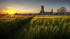 path through the crop (BarryKelly) Tags: sun church set path ruin crop feild kildare ballinafadh